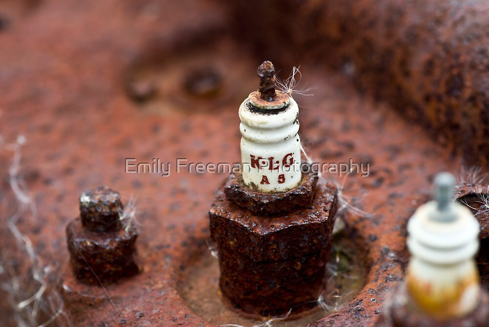 Spark Plug by Emily Freeman Photography
