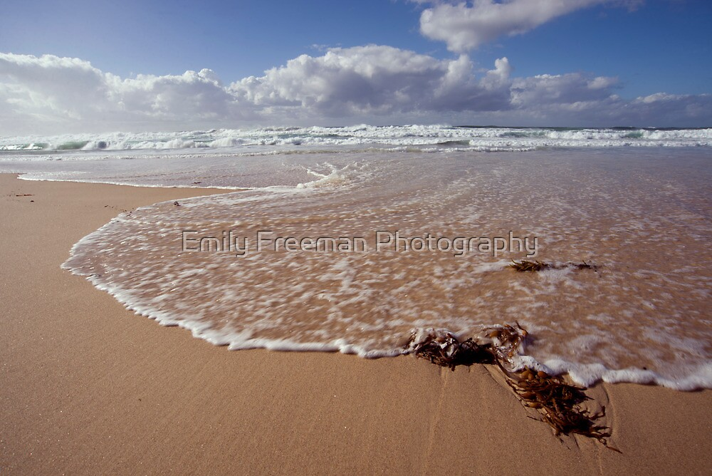 Seaweed by Emily Freeman Photography