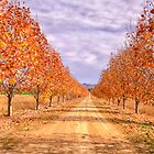 Autumn  Drive - Gulgong,NSW - The HDR Experience by Philip Johnson