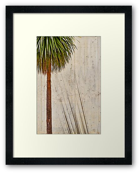 Palm Shadows by VictoriaSM