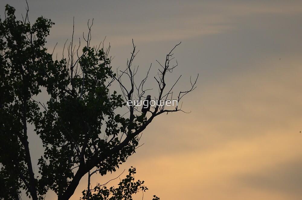 eagle  by ewgowen