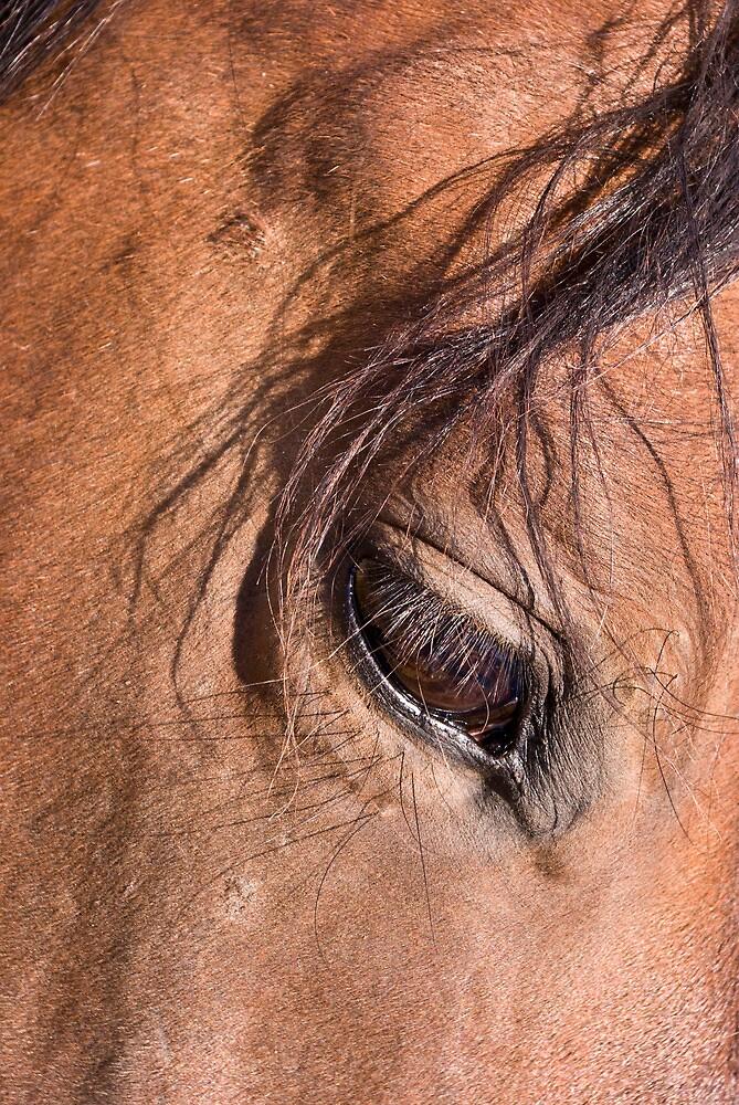 Eye to Eye by Coralea Breezley