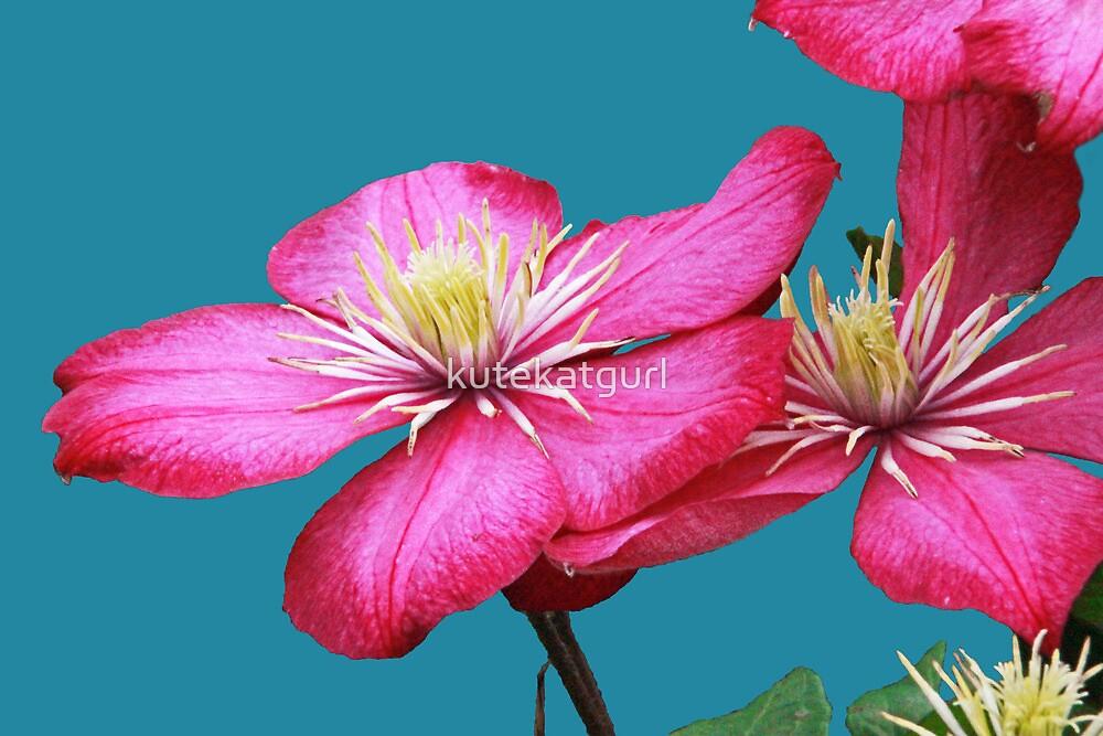 Pink Clematis by kutekatgurl