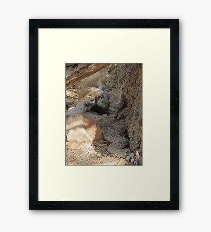 Squirrel vs. Rattler Framed Print