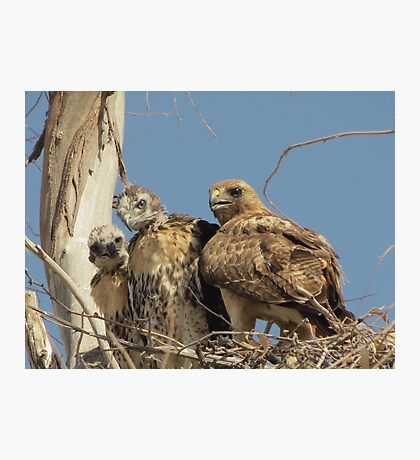 Red-tailed Hawks ~ Morning Teachings Photographic Print