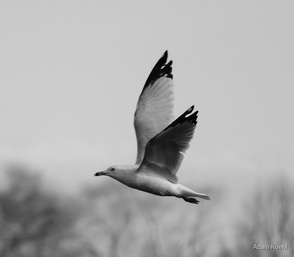 Free Flight by Adam Kuehl