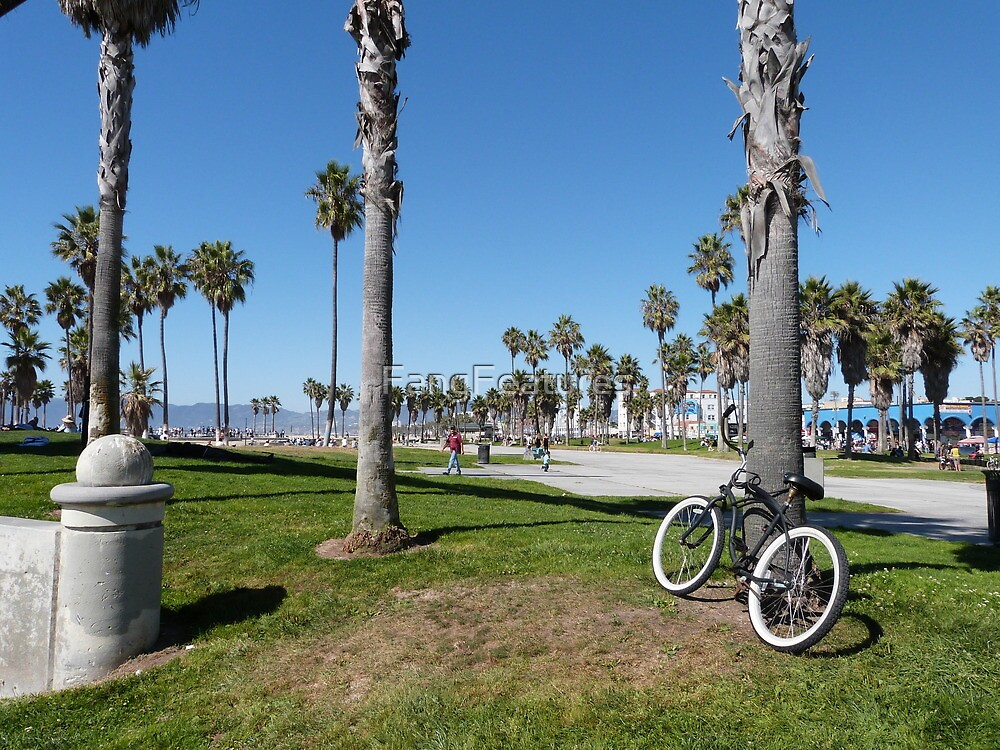 Venice Beach Bicycle by FangFeatures