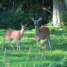 Mommy Deerest and Deerest Baby by Ron Russell