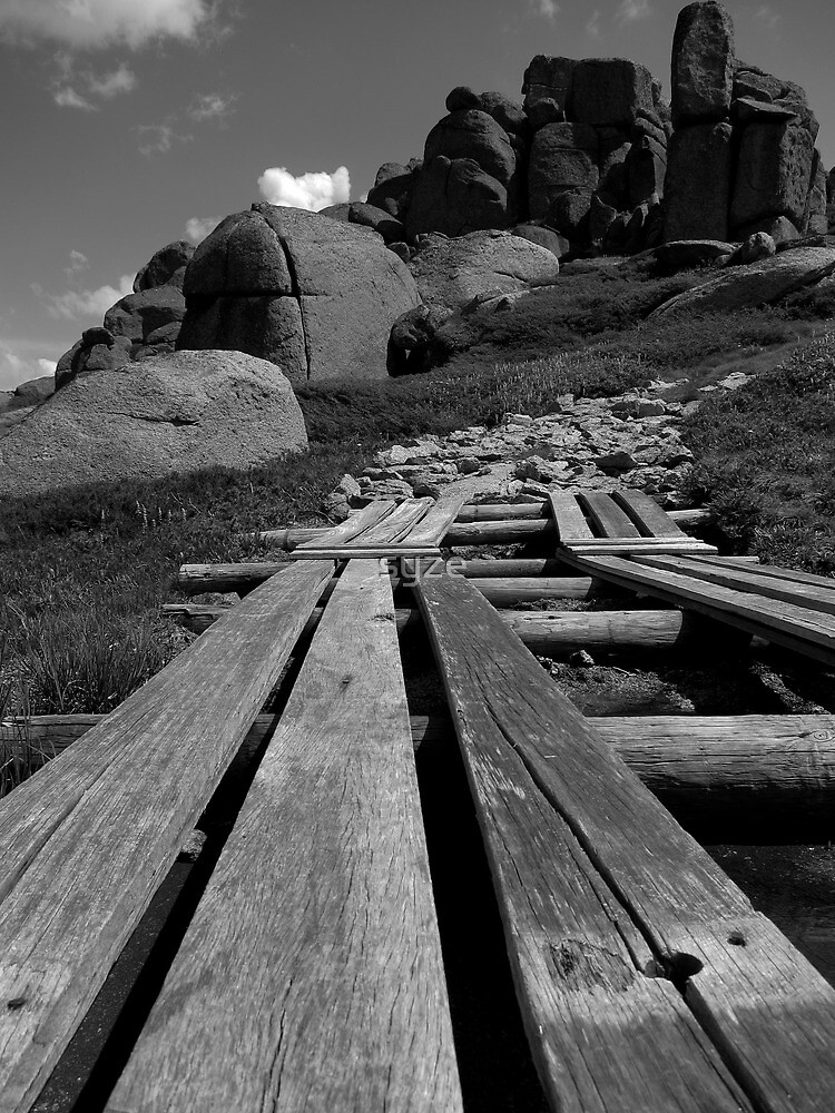 Timber Path by syze
