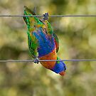 Bird on a wire by TonySlattery