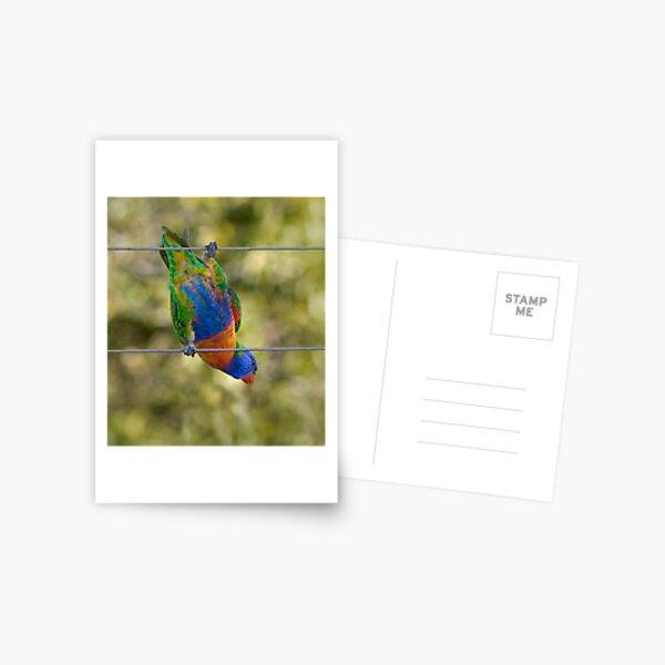 Bird on a wire Postcard