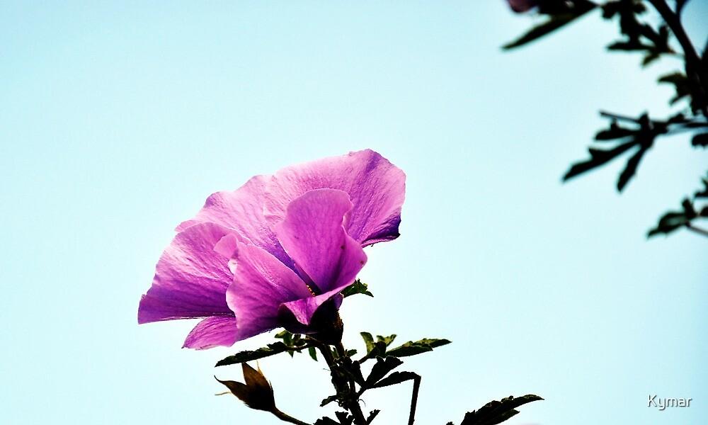 Flower 01 by Kymar
