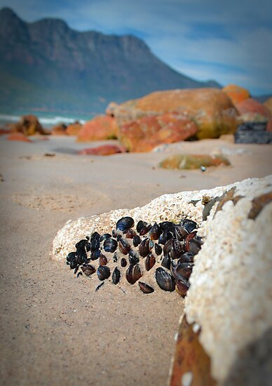 Mussels by ryoung2207
