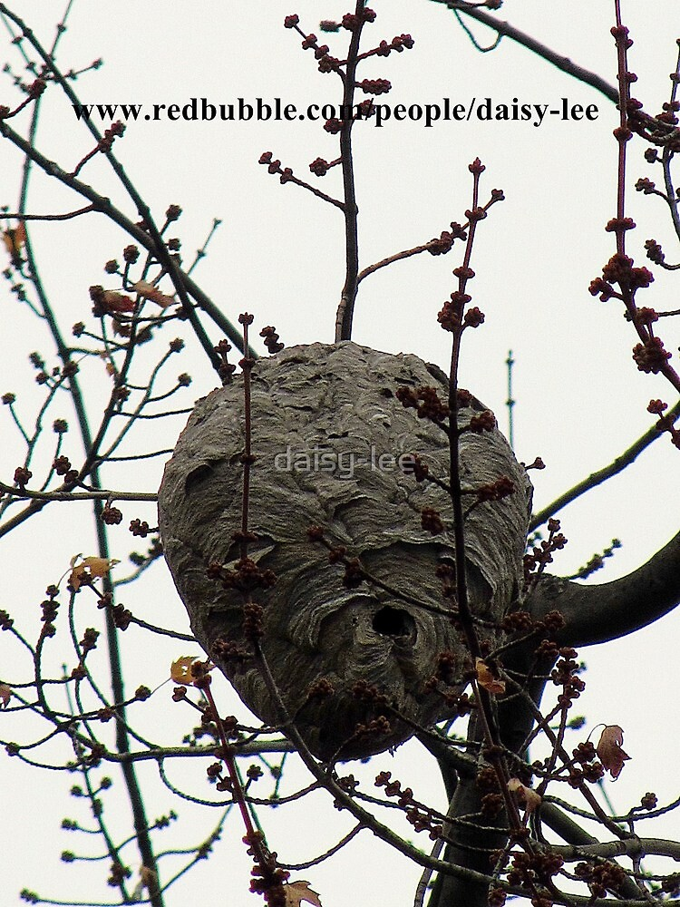 Wasp nest by daisy-lee