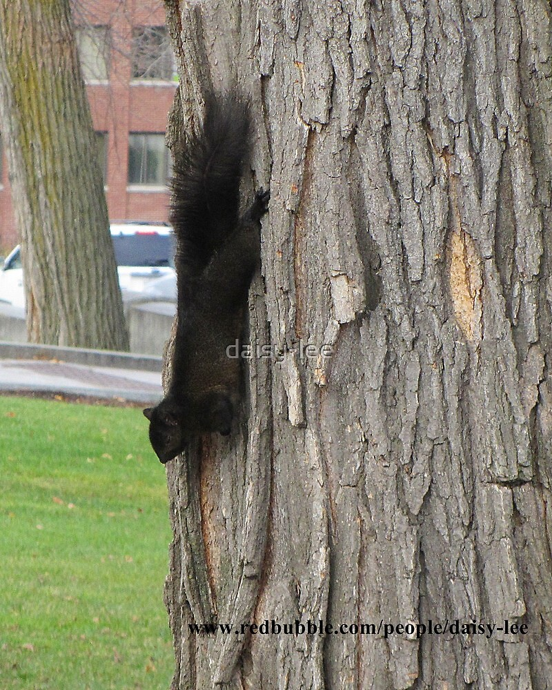 Squirrel Old Quebec  by daisy-lee
