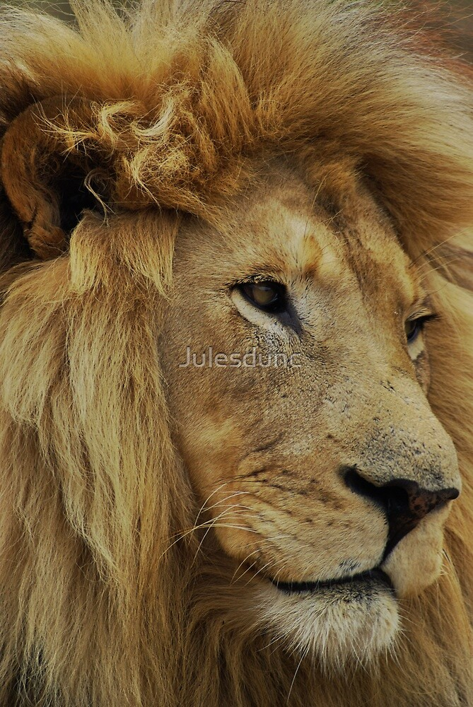 lion mane by Julesdunc