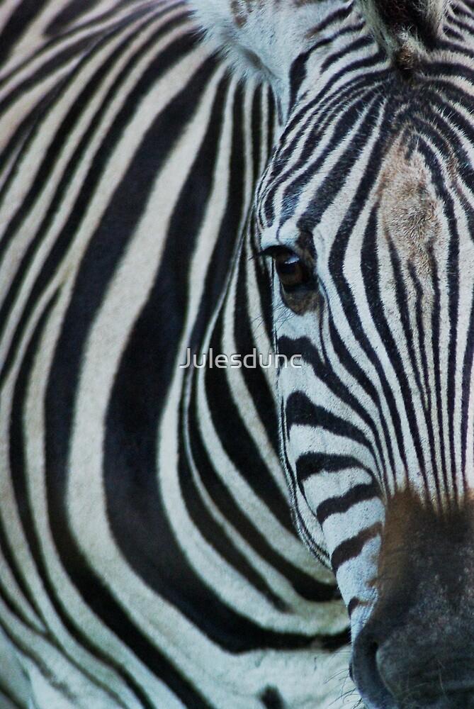 zebra by Julesdunc