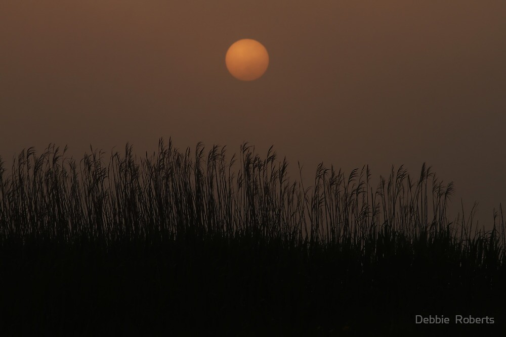 Foggy Sunset Over Grass by Debbie  Roberts