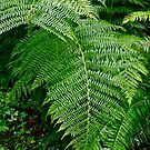 Tree Fern by David Davies