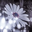 Sparkling flower by mark thompson