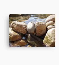 Watered Rocks Canvas Print