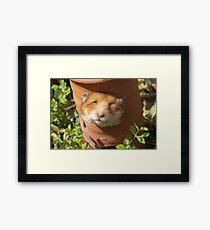 Hamster head Framed Print