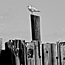 Patient Gull by Lotus0104