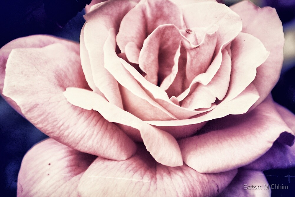 Only a Rose by Satom M Chhim