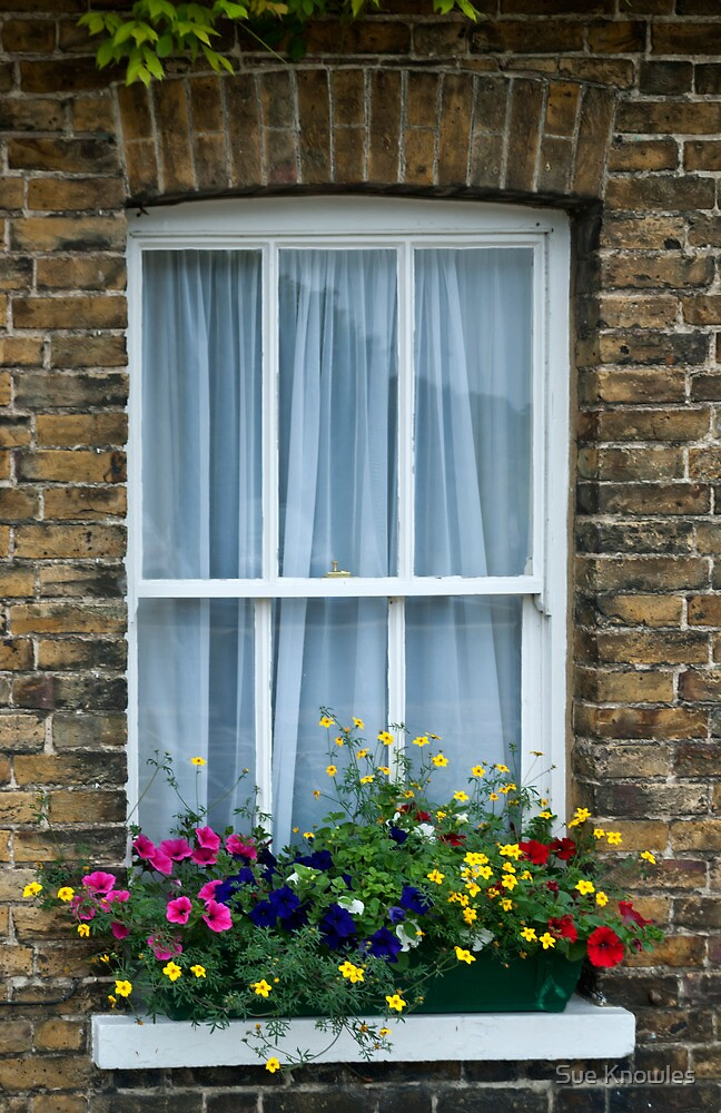 Cottage Window, Sandwich, Kent by Sue Knowles