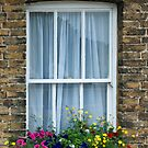 Cottage Window, Sandwich, Kent by Sue Knowles
