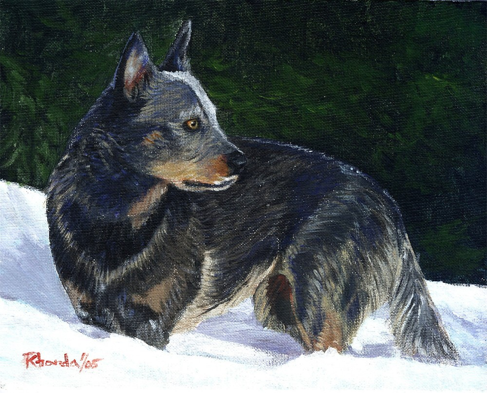 Australian Cattle Dog Portrait by Oldetimemercan
