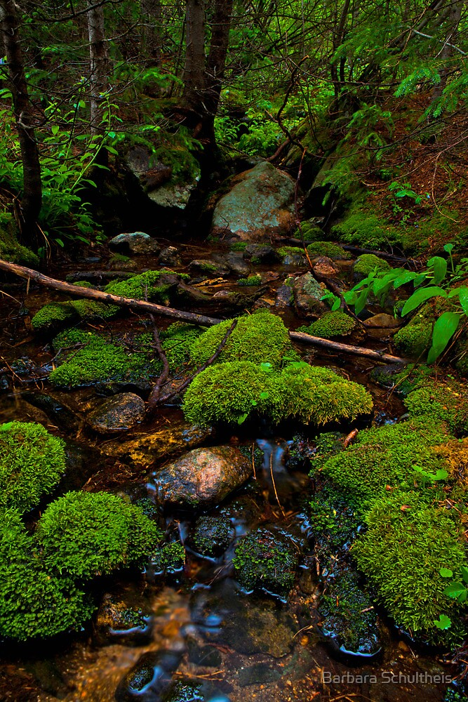 Moss Covered Stream by Barbara Schultheis