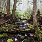 Stream Near Snoquera Palisades - Snoqualmie Natl. Forest by Mark Heller