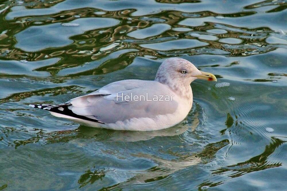 Seagull taking a Swim by HelenLazar