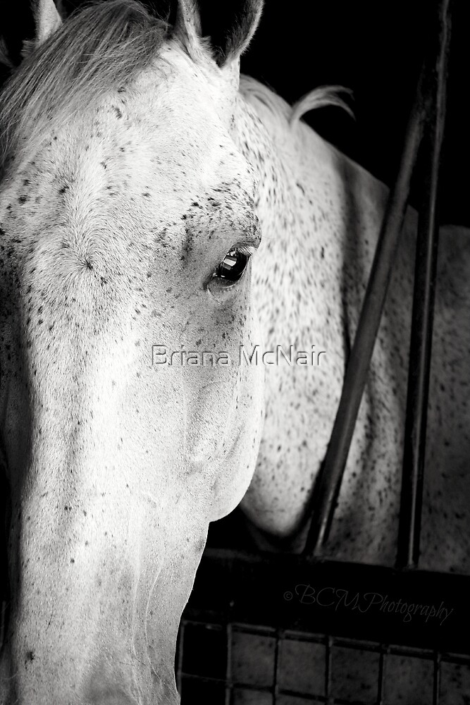 Window into the Soul of a Horse by Briana McNair