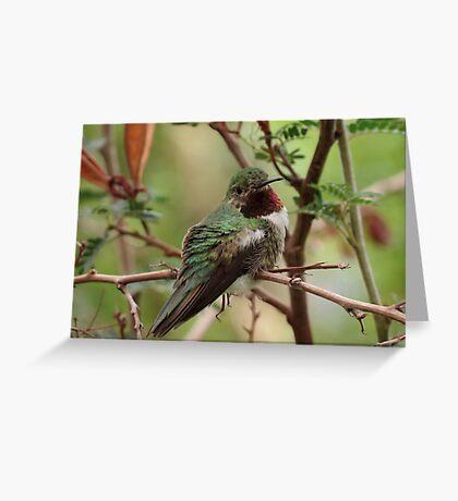 Broad-tailed Hummingbird (Male) Greeting Card