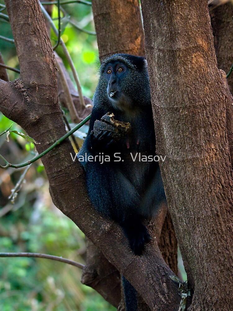 Diadem Monkey by Valerija S.  Vlasov