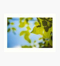 Green Leaves Against The Sky Art Print