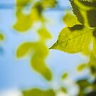 Green Leaves Against The Sky by GrishkaBruev