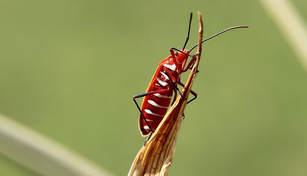 Bug... by sgitesh