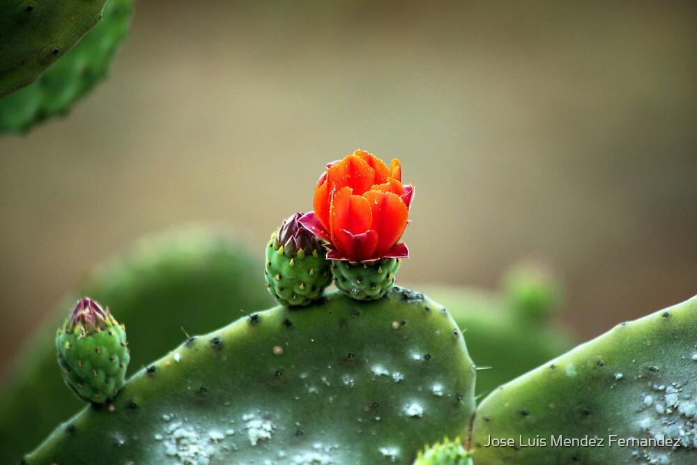 wild canarian cactus by Atman Victor