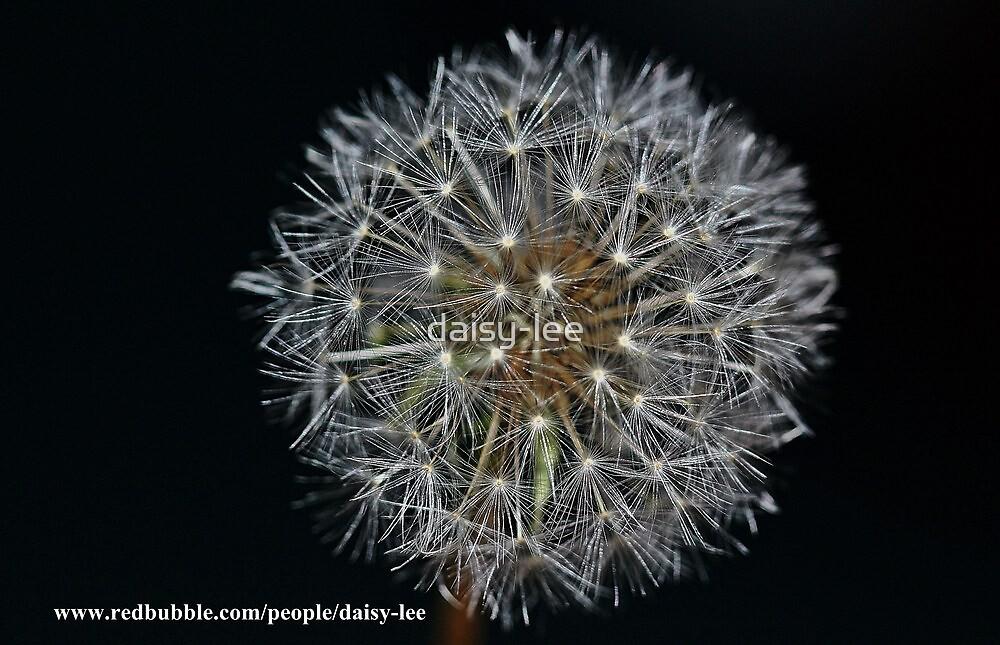 Dandelion 2 by daisy-lee