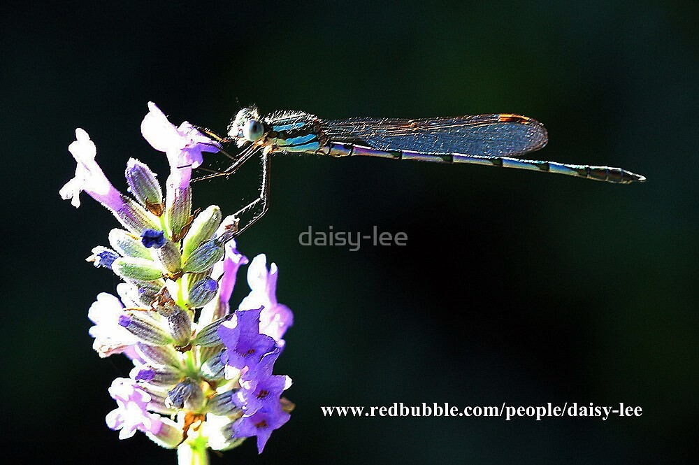 Dragonfly baby by daisy-lee