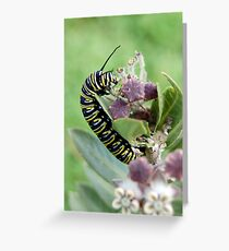 Danaus Plexippus Greeting Card