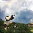 The Mountain Wild. by Kenart