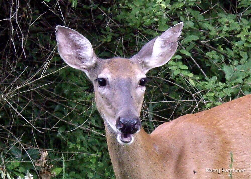 Deer Me by Rusty Katchmer