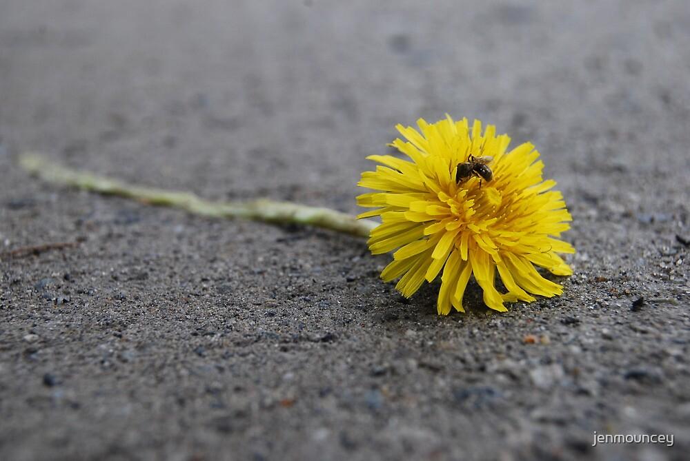 Roadkill Dandelion by jenmouncey