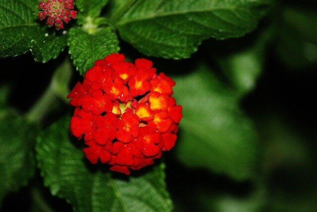 Flower by ginger159