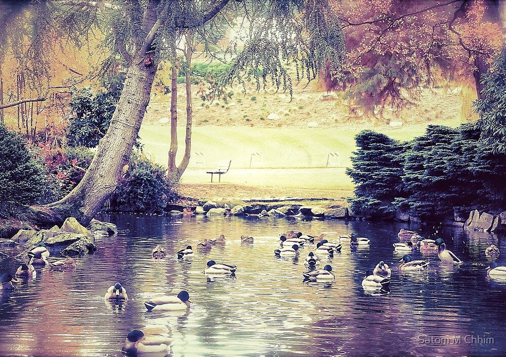 Ducks are out to Play by Satom M Chhim