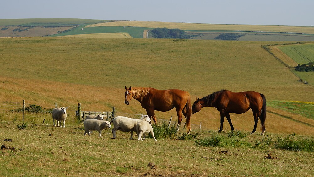 """Horse to Sheep, """"Save some for us"""". by glynk"""